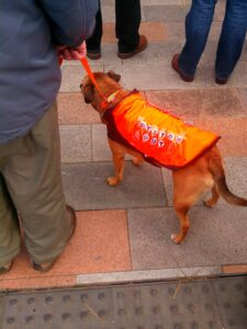 Dogs against Oyston-insantiy.